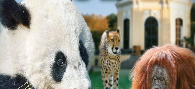Zoo Vienna 3D – Der Tiergarten Schönbrunn